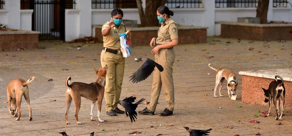 Police officers feeding stray dogs
